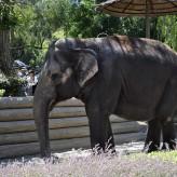 SFBay.ca Uses Six Flags Discovery Kingdom Elephant Photo