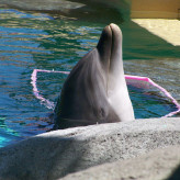 One Green Planet Uses Six Flags Dolphin Photo